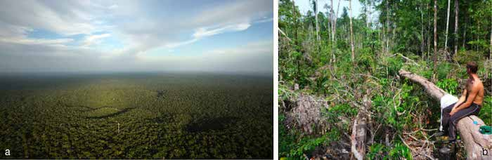 a) ATTO tower from aircraft, b) Trees downed by wind in a central Amazon forest